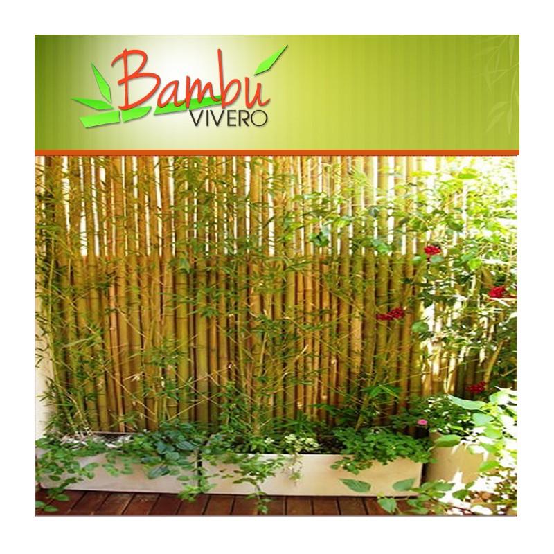 vivero el bambu en villa pueyrredon bayres