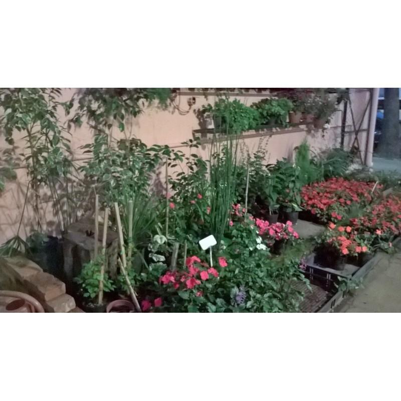 Vivero el jard n de salvador en villa pueyrred n bayres for Vivero tu jardin