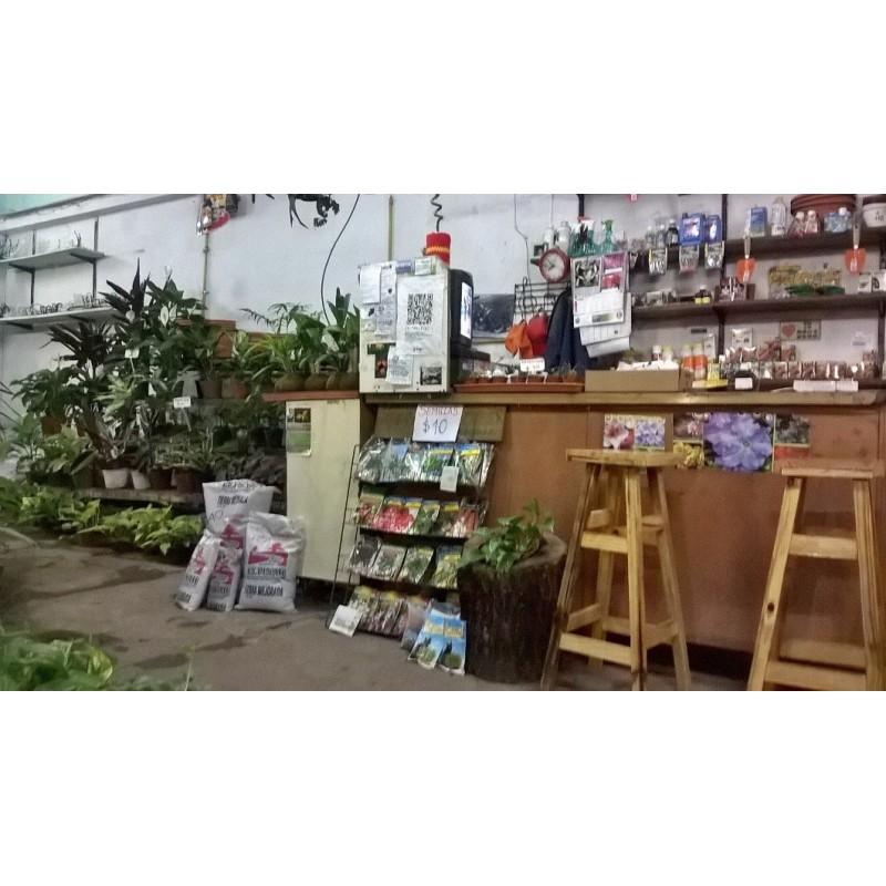 Vivero el jard n de salvador en villa pueyrred n bayres for Vivero el botanico